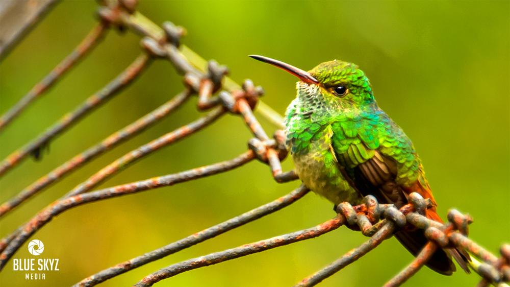 Birds in Belize