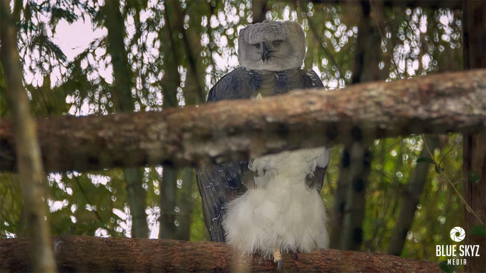A Bird in Belize
