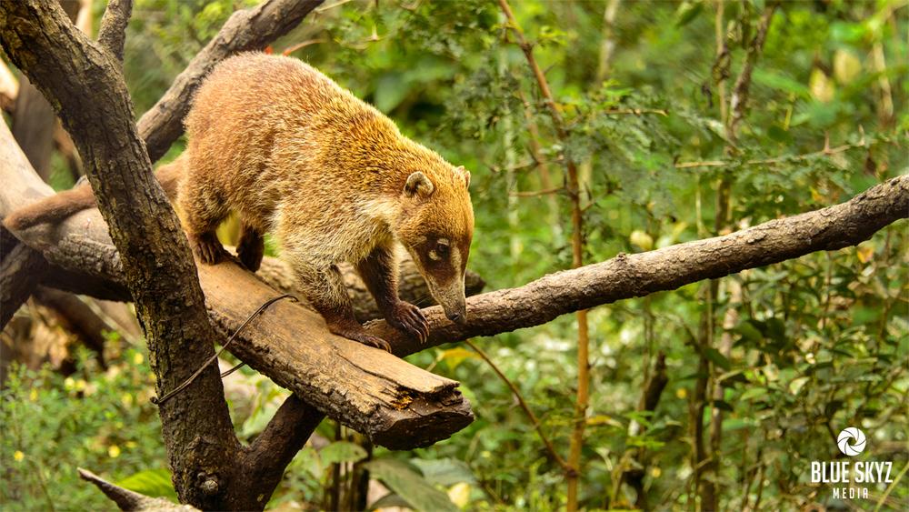 Belize Zoo Trip