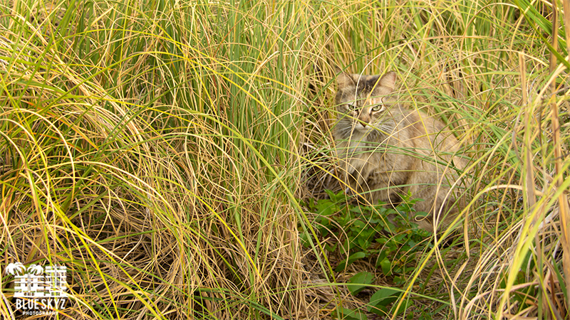 Feral Cat Hiding
