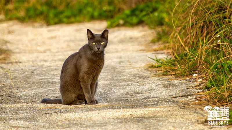 Feral Cat Miami
