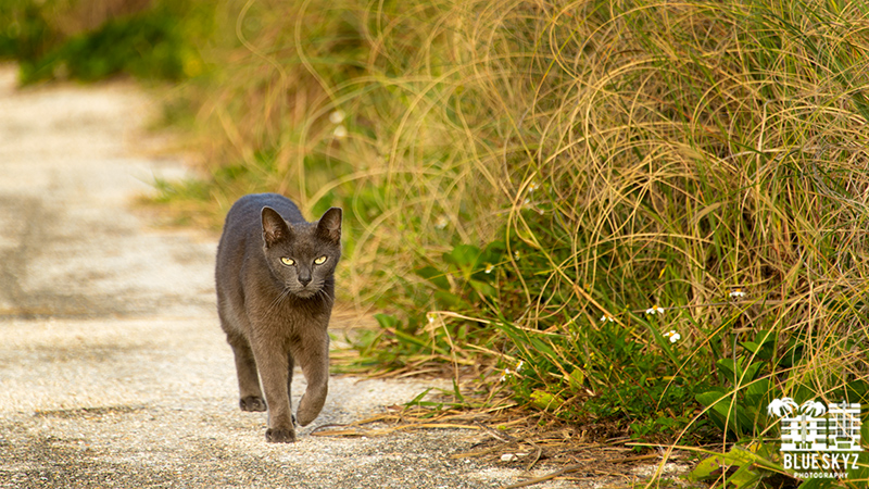 Black  Cat on Miami Beach
