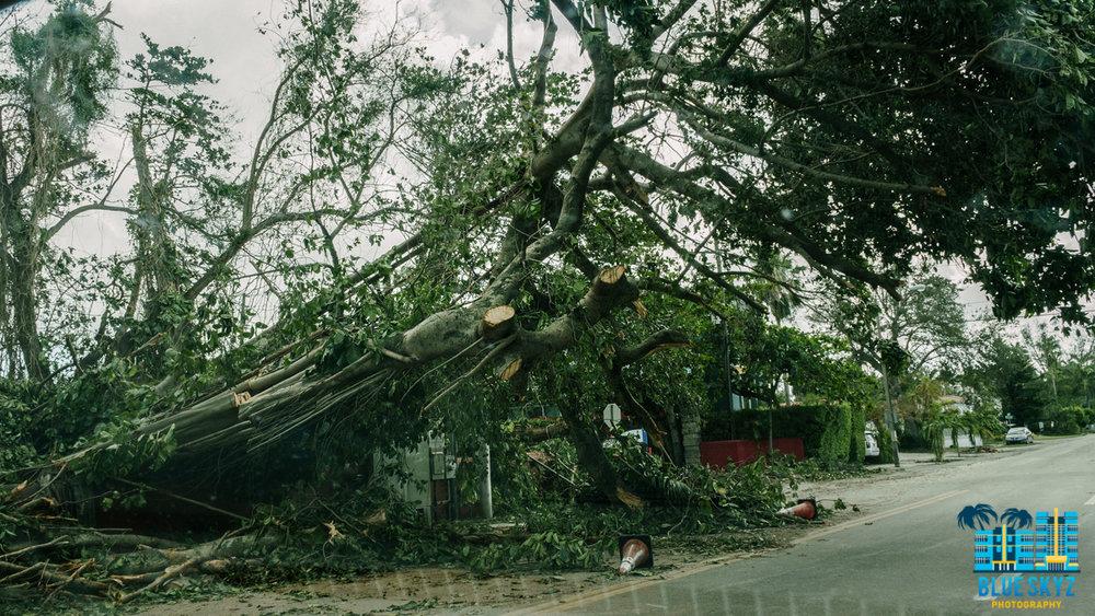 hurricane-irma-19.jpg
