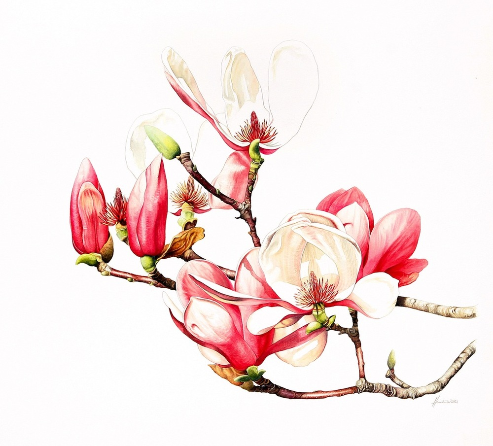 10-Willis-Magnolias copy.jpg