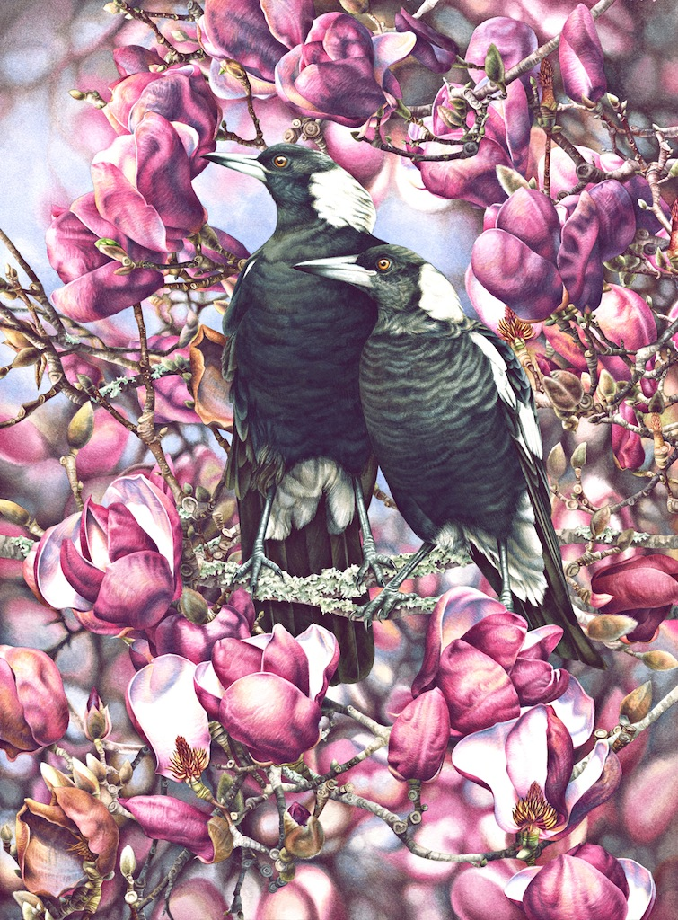 19-Willis-Magpies and Magnolias copy.jpg