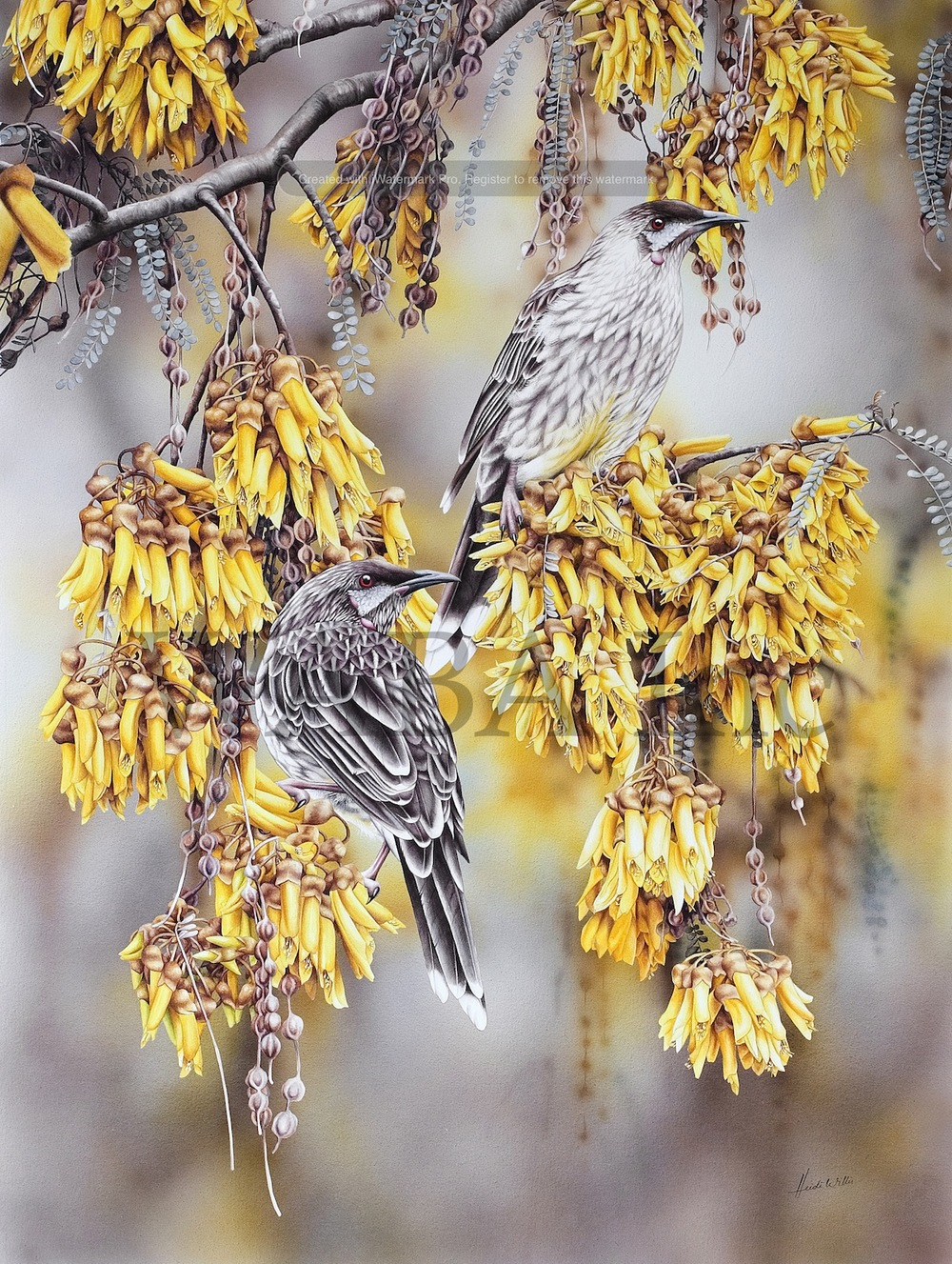 Wattlebirds and Sophora microphylla