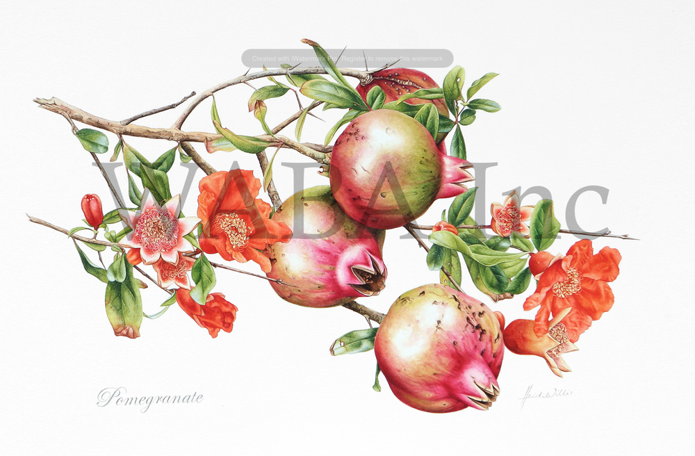 2-Willis-Pomegranates.jpg