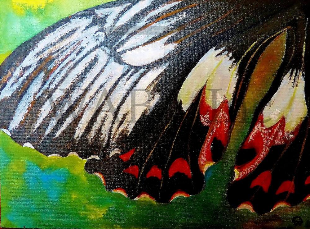 Lepidoptera 2, Papilio ambrax