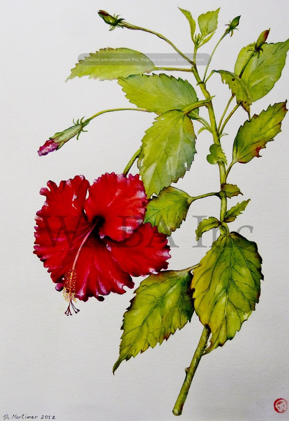Hibiscus rosa sinensis Hybrid