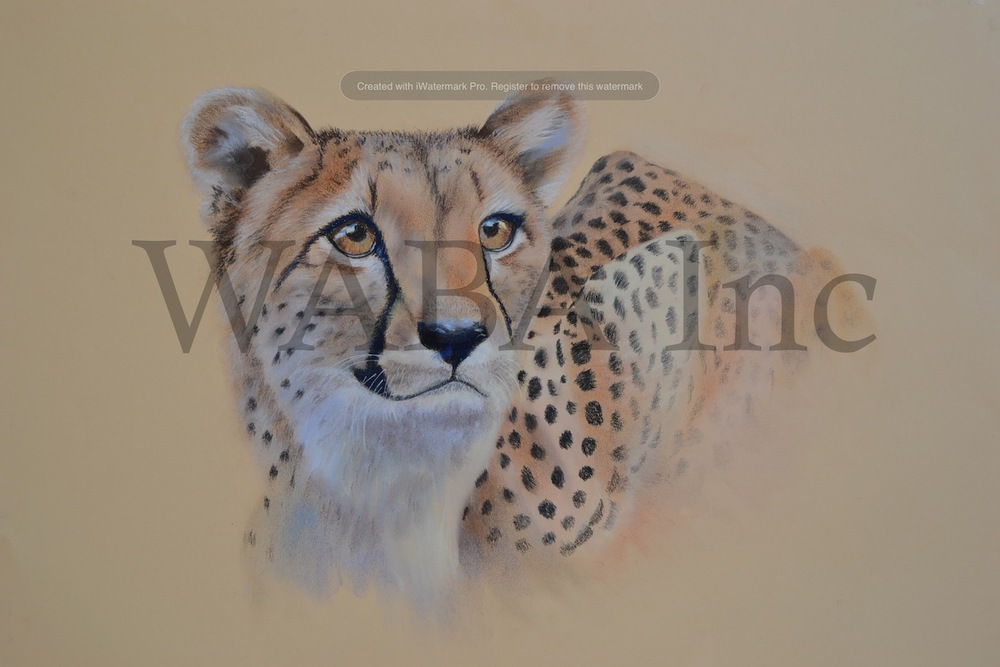 Cheetah by Leigh Murray. Pastel.