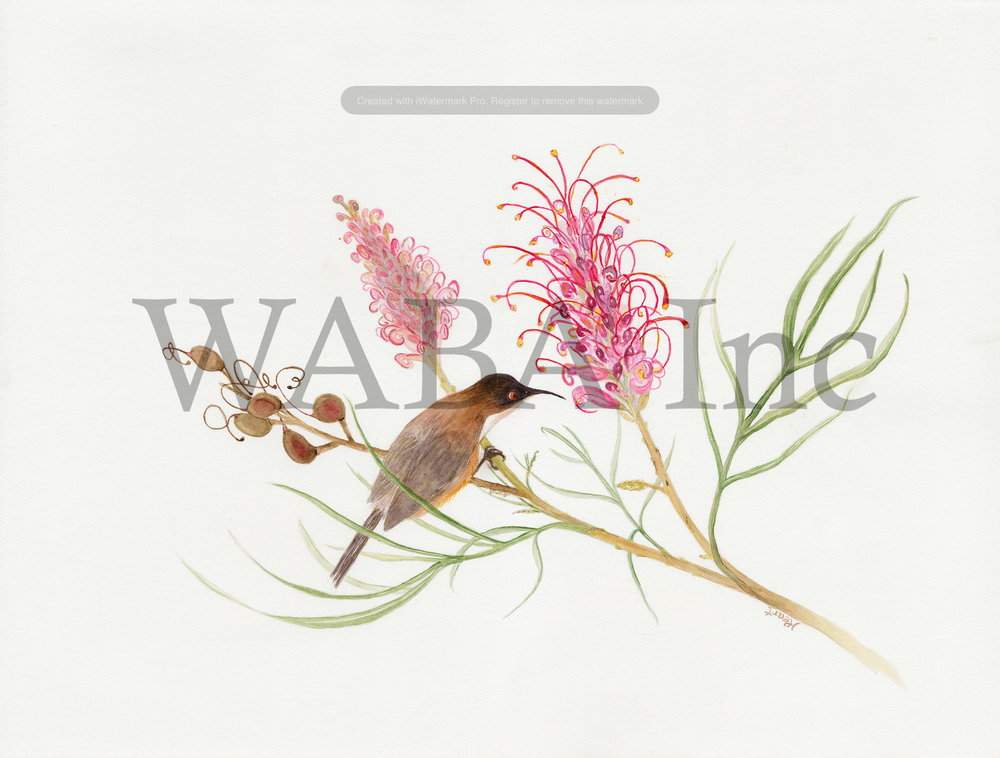 Eastern Spinebill and Grevillea by Helen Peart