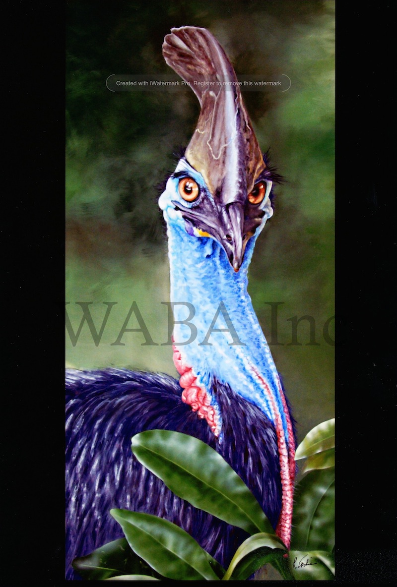 Cassowary, Rikki Fisher, gouache, 980 x 600 mm