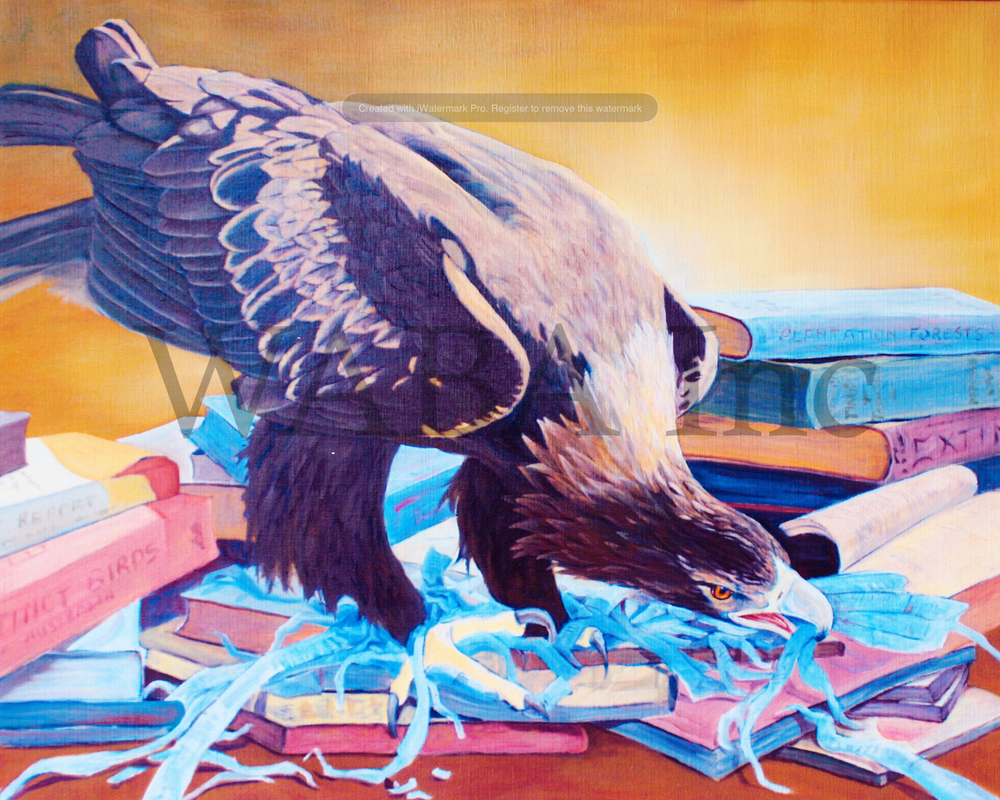 In the pages of a book - Wedgetailed Eagle (Tasmanian), Sue Brook, oil on canvas, 620 x 770 mm