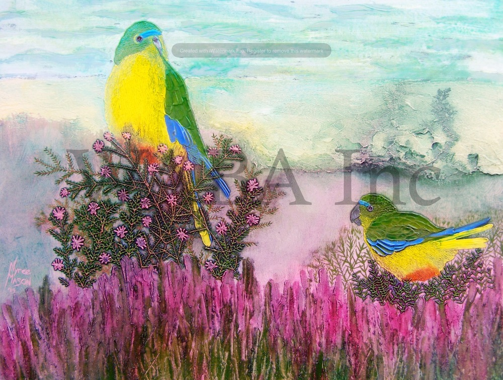 Nyree Mason,  Orange Bellied Parrots,  acrylic and ink, 240 x 300mm