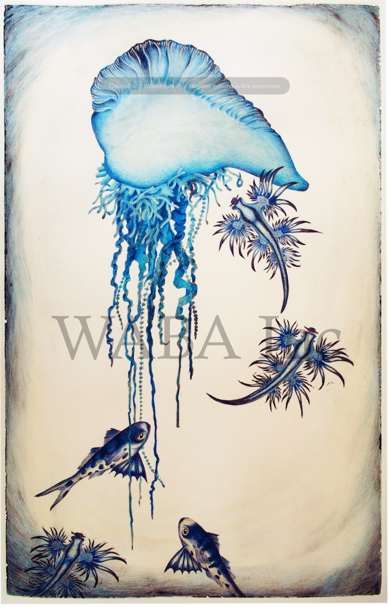 Blue Bottle, Bluebottle Fish and Blue Nudibranch, Sarah Mitchell, hand coloured lino cut, 600 x 380 mm
