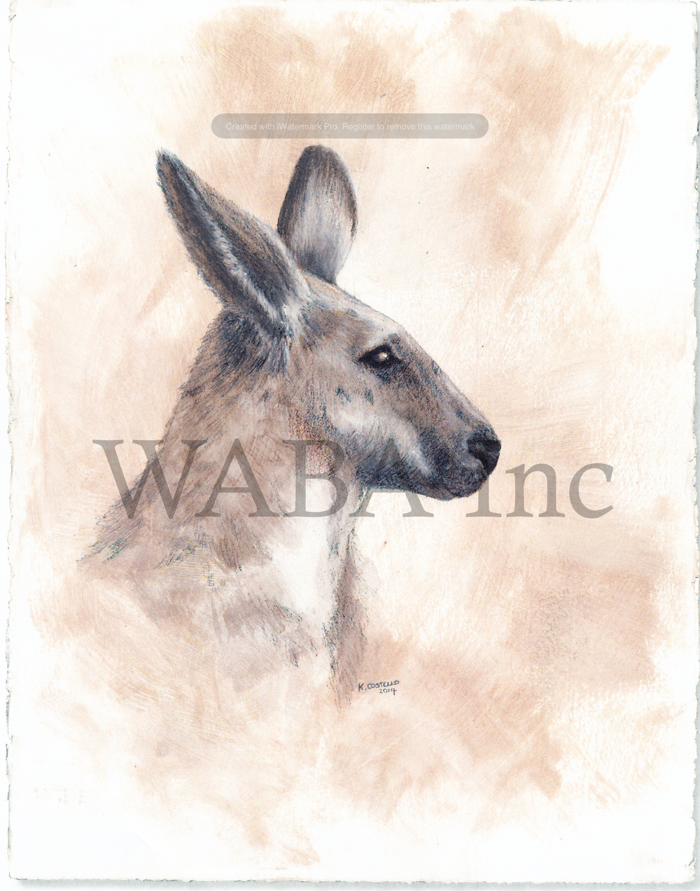 Female Kangaroo, Karen Costello, oil and graphite, 230 x 300 mm