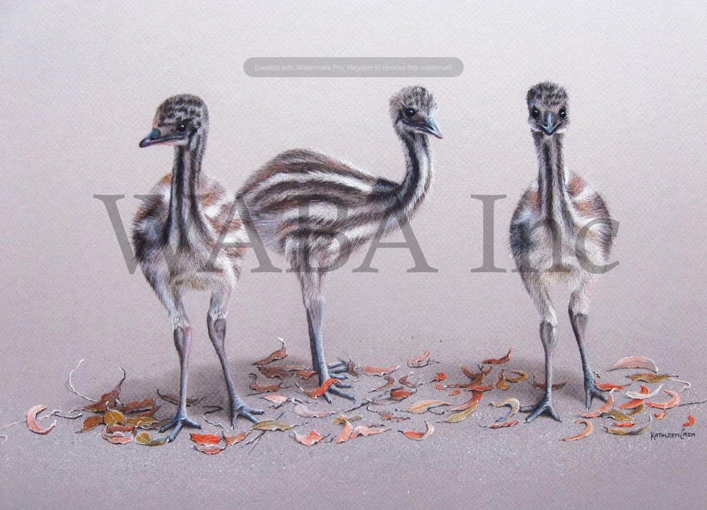 Emu Chicks, Kathleen Cain, pastel, 225 x 460 mm