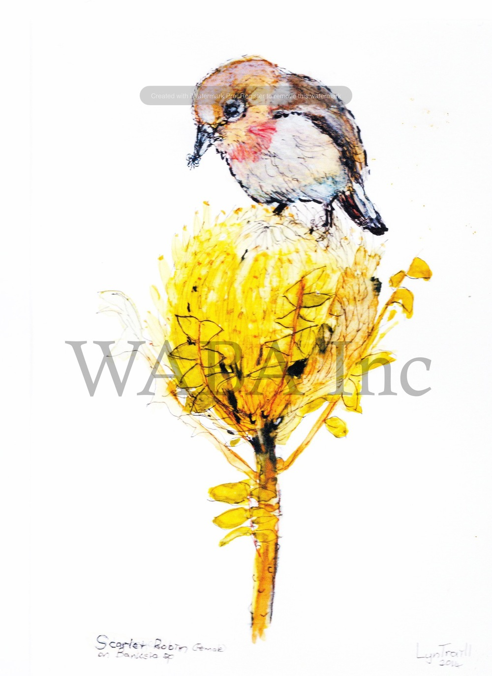Scarlet Robin on Banksia, Lyn Traill, ink and watercolour, 390 x 330 mm (SOLD)