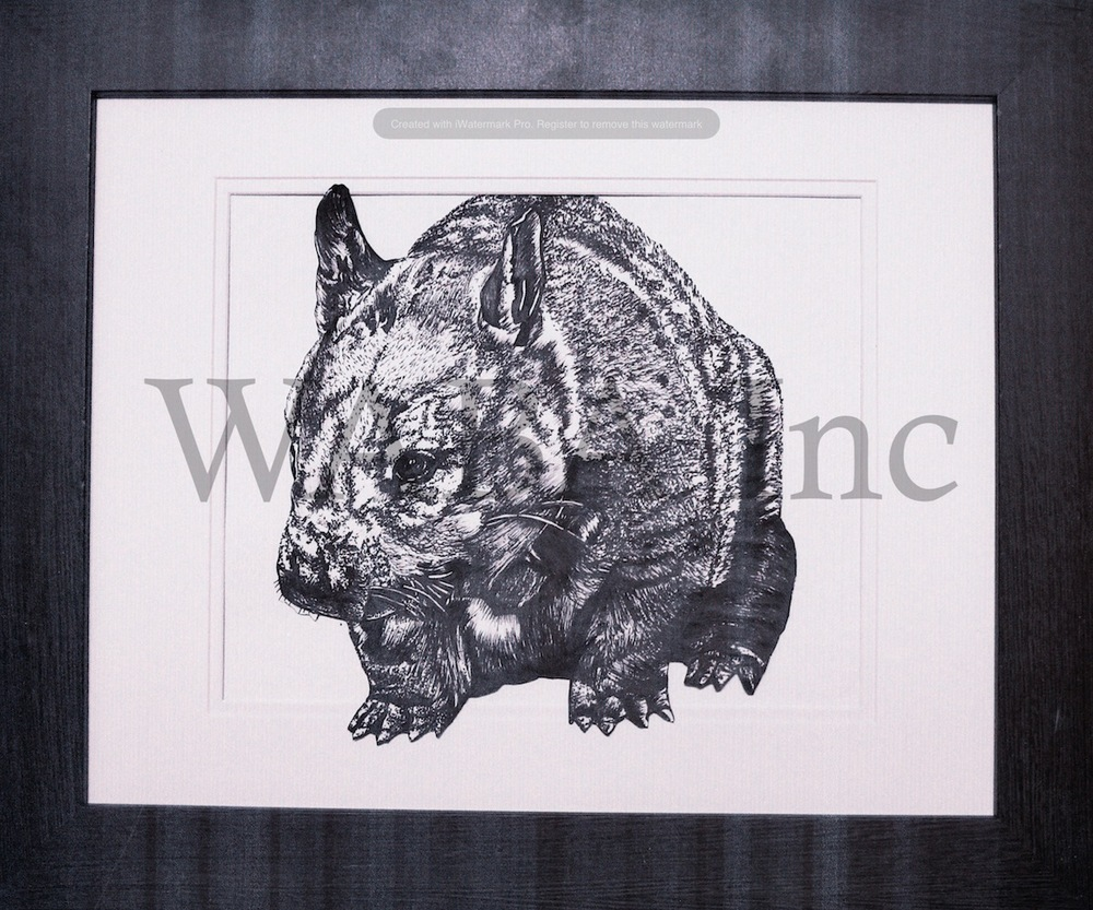 Northern Hairy-nosed Wombat, Tara Fitzgerald, pen and ink, 600 x 500 mm