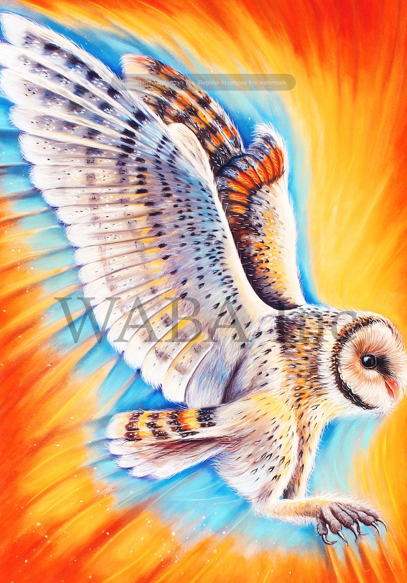 Tasmanian Masked Owl in Flight, Joanne Barby, pastel, 880 x 1000 mm