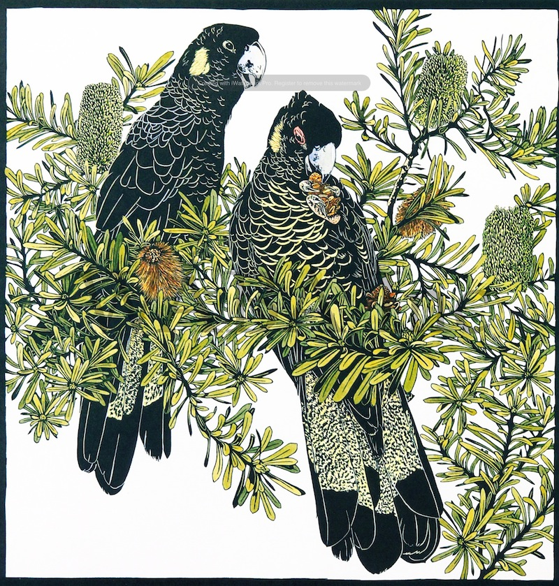 Yellow Tailed Blacks, Vida Pearson, linocut, 870 x 810 mm (SOLD)