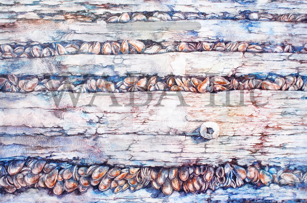 Barnacle , Lesley Wallington,  Watercolour on gesso ,  700 x 470 mm