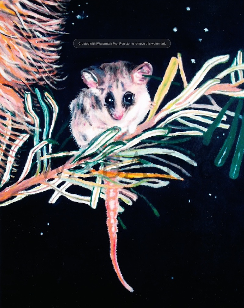 Pygmy Possum , Annabel Fox, oil, 410 x 510 mm