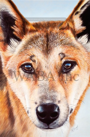 Best application of chosen medium.    Misunderstood (Who's the real threat?), Kerrie Dixon, pastel, 700 x 900 mm (SOLD)