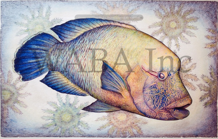 Overall Winner 2014.  Crowns for a Maori Wrasse, Sarah Mitchell, hand coloured lino cut, 600 x 380 mm (SOLD)