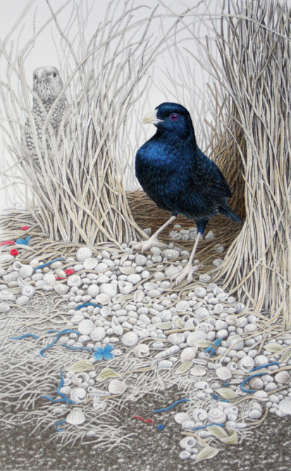 Bower Birds -Expecting company