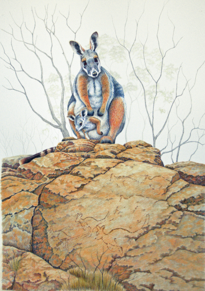 Rock Wallaby Juniors history lesson
