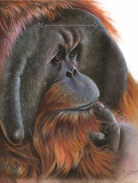 primate1.jpg