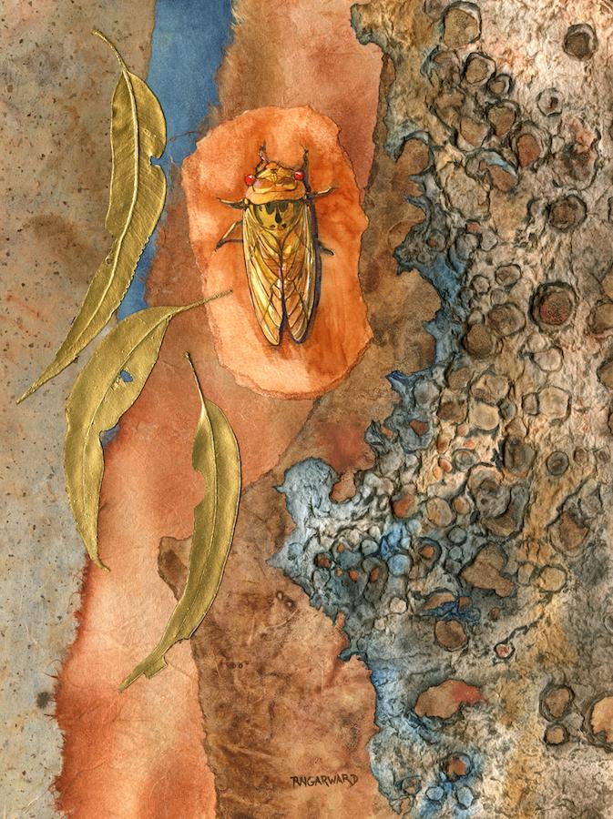 rhonda garward cicada aug.jpg