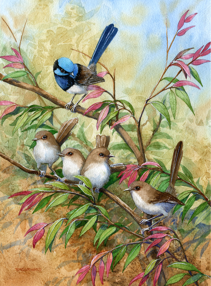 rhonda garward wren family in the lilli pilli aug.jpg