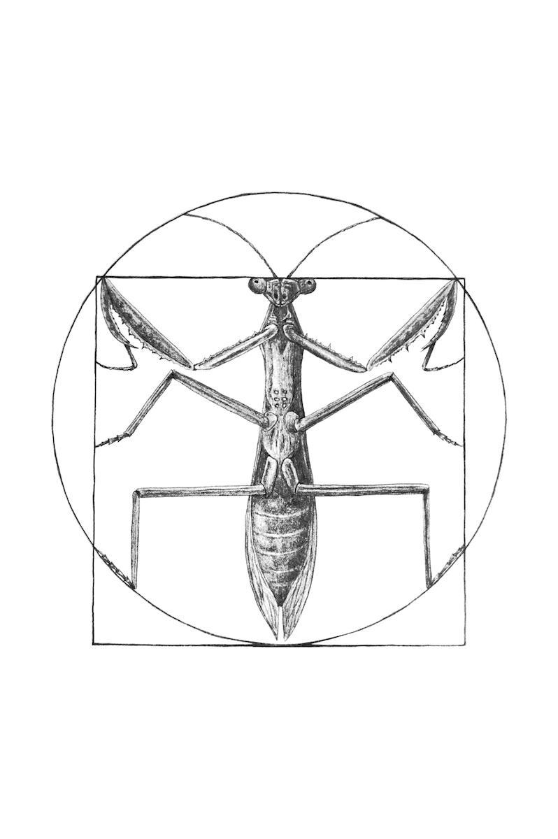 Randell Jana vitruvian mantis.png