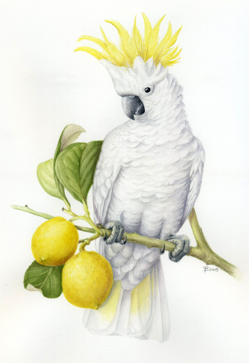 Prue Sailer Cockatoo with Lemons.jpg