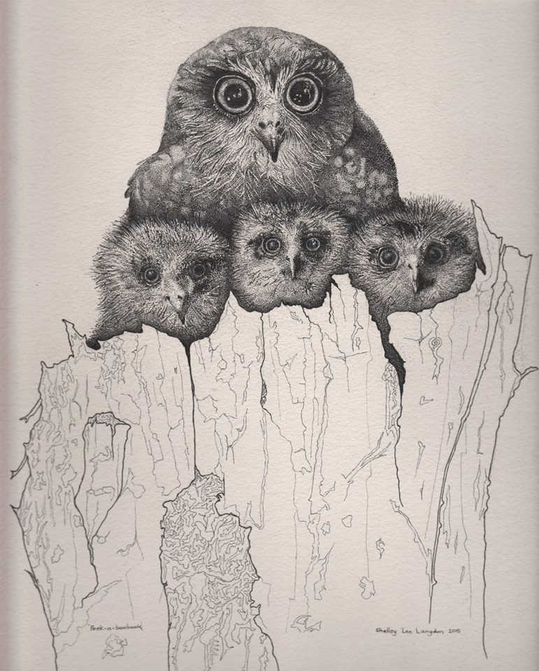 Boobook owls (Card)