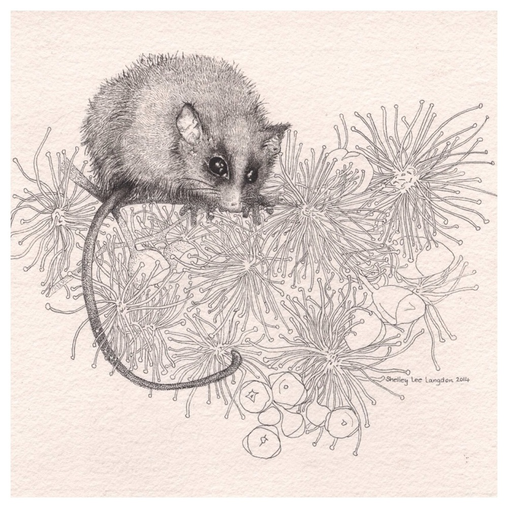 In the Pollen - Pygmy possum  (Card)