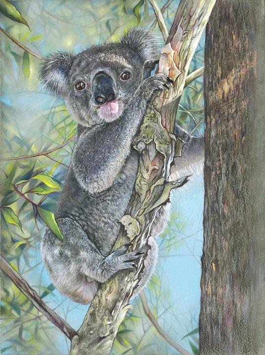 Koala (Card)