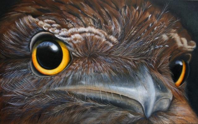 Tawny Frogmouth Eyes.jpg