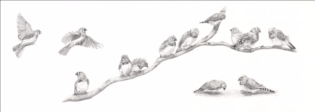 Zebra Finch Character Study.jpg