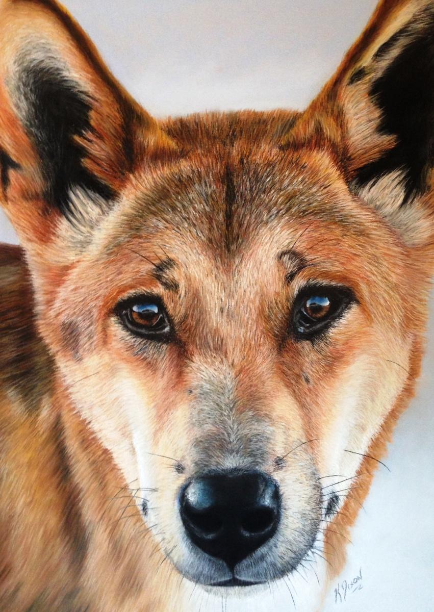 Dingo (Card)