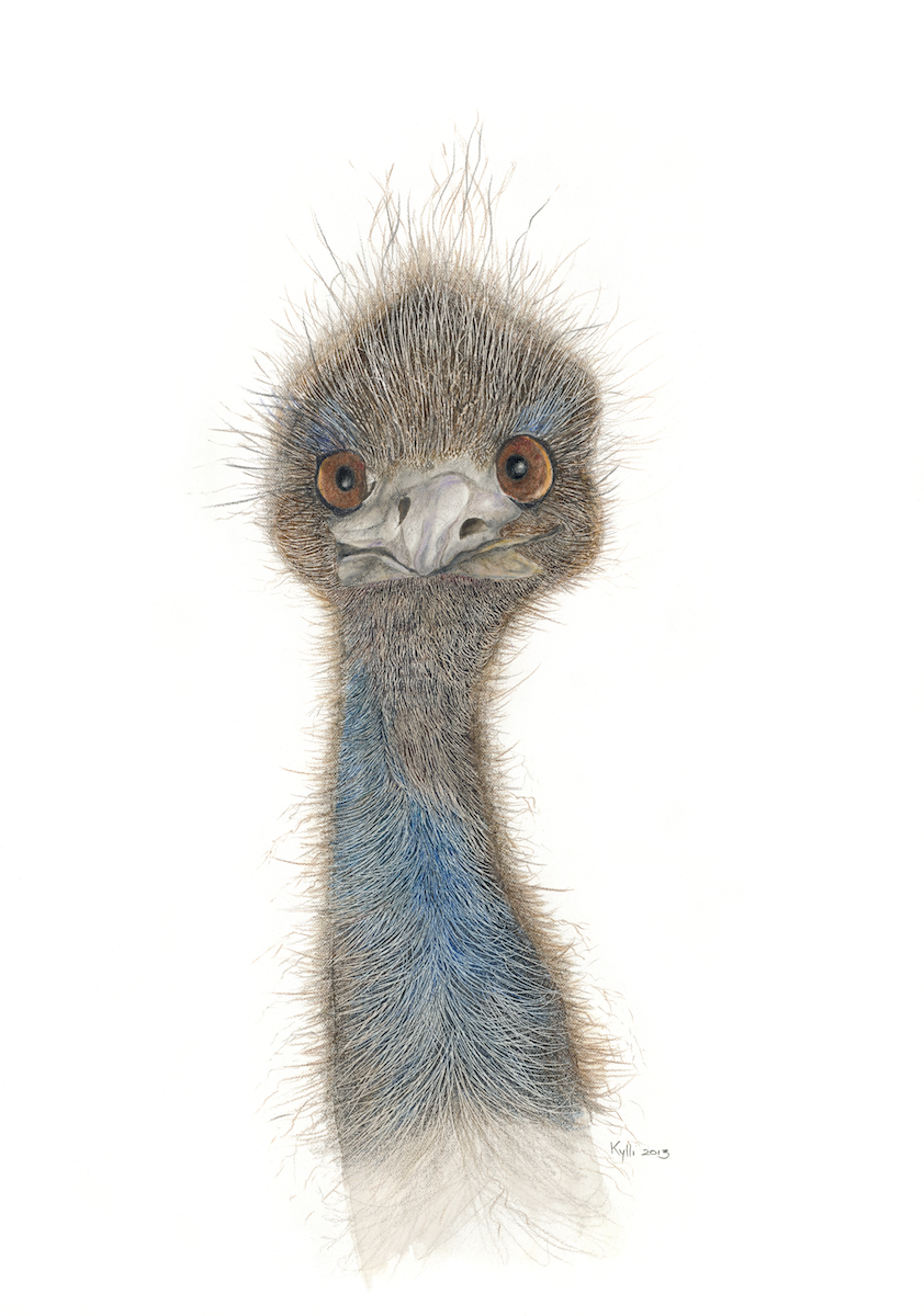 Curious emu (Card)
