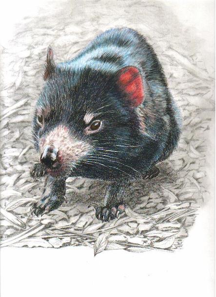 tassie devil (Card)
