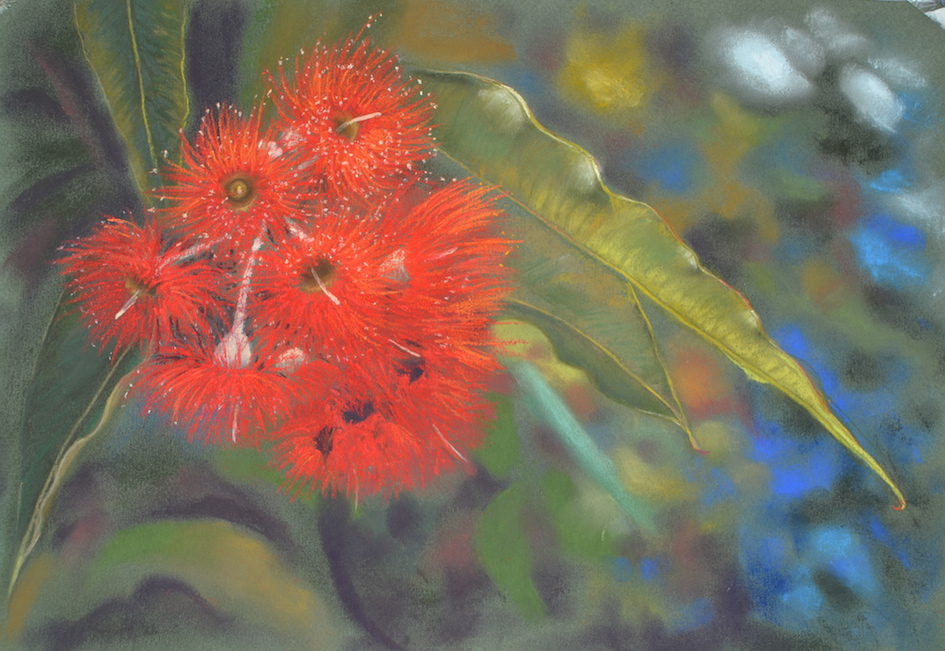 Red flowering gum (Card)