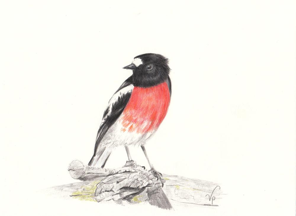 Scarlet Robin (Card)
