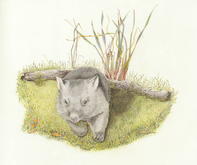 Wombat (Card)