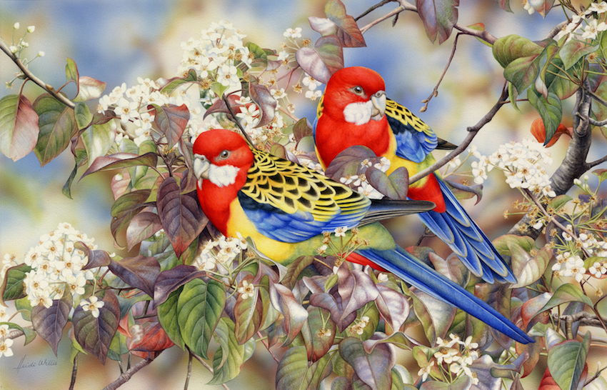 Eastern Rosellas (Card)