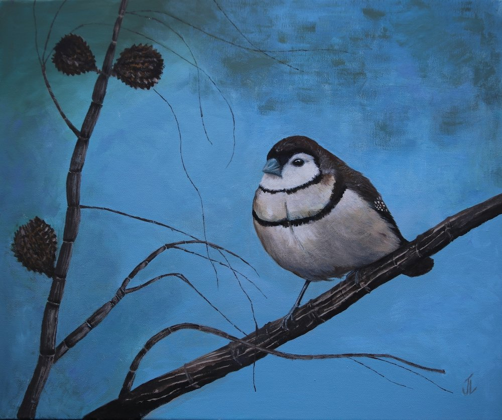 Once upon a casuarina - Double-barred finch