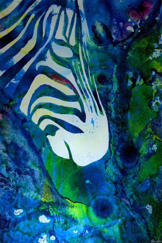 Zebras Oasis